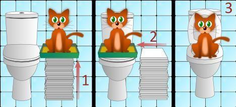 Порядок привчання кішки до туалету