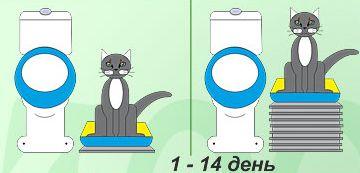 Привчаємо кішку до унітазу