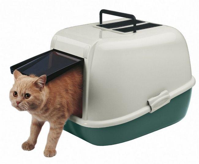 Привчити кошеня до туалету - саме відповідальне завдання господаря