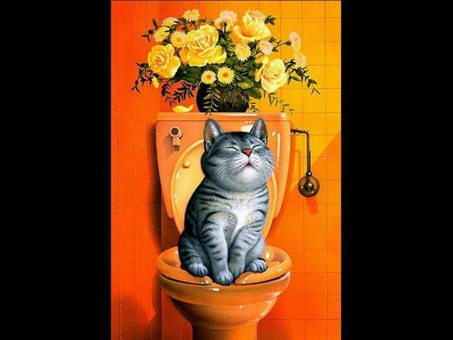 Поступово кішку можна привчити до унітазу