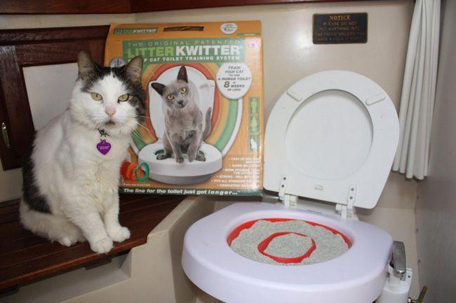 Новий гаджет в туалеті