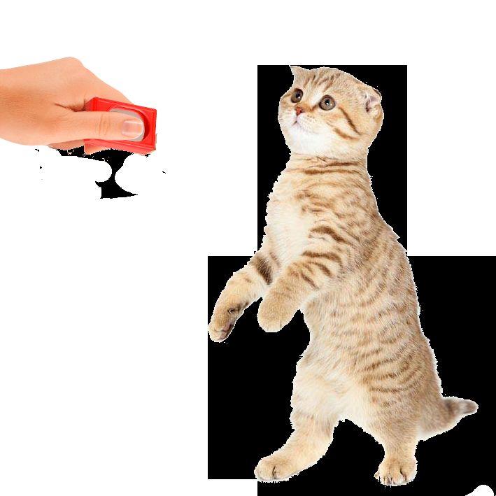 Привчання кішки до клікера