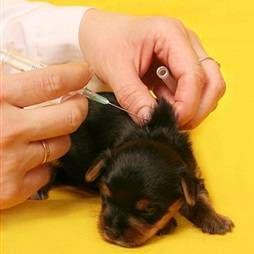 Щеплення (вакцинація) кішок і собак