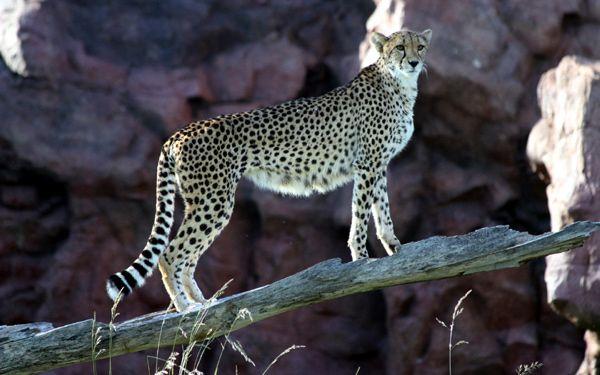 Тривалість життя тварин