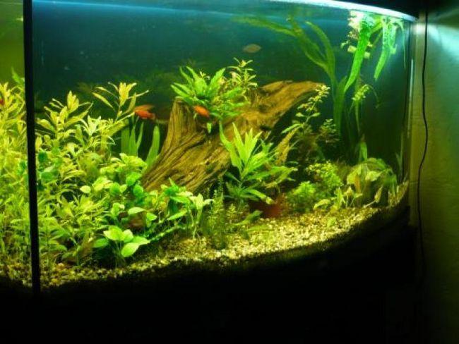 Продукти хіміндустрії, якими можуть отруїтися риби в акваріумі
