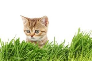 Прогулянки з кішкою