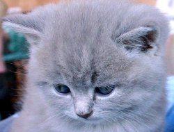 Фото 1 Прояви любові кішки