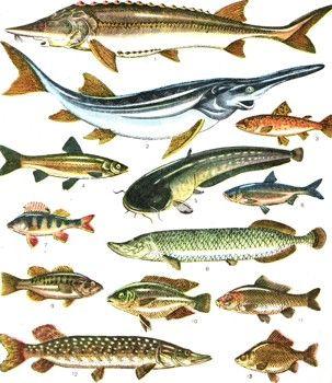Промислові риби