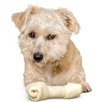 Пропав апетит у собаки - коли пора звернутися до лікаря?