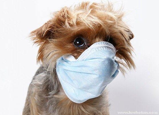 Застуда у вашій собаки: лікування та профілактика