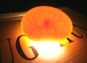 Перевіряємо яйця овоскопі: особливості процесу