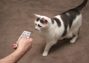 Пульт дистанційного керування для кішки
