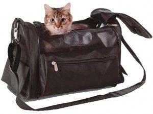Подорож з кішкою