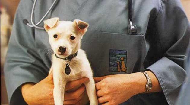 Профілактика мікоплазмозу у собак