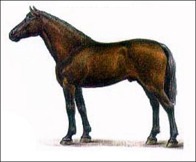 Кабардинская кінь. Малюнок, картинка породи коней
