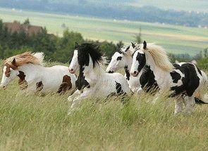 Писані конячки: все про рябого масті