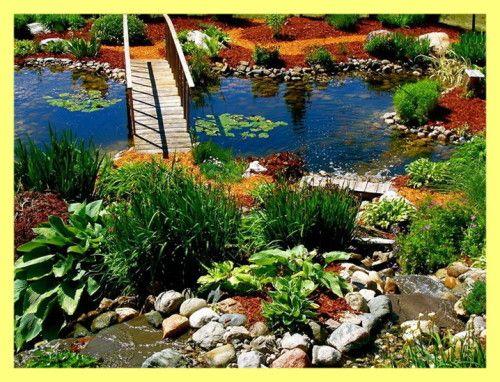 Рослини для ставка на дачі фото
