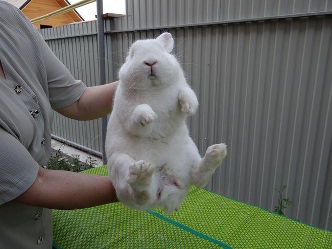 Визначаємо підлогу у кролика