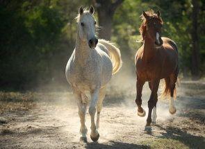 Різноманітність забарвлень коней: розбираємо масті