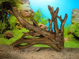 Різновиди деревини, придатної для акваріума