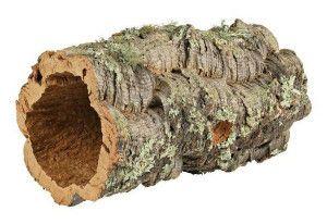 Коркове дерево