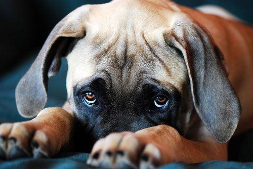 зудневая хвороба у собаки