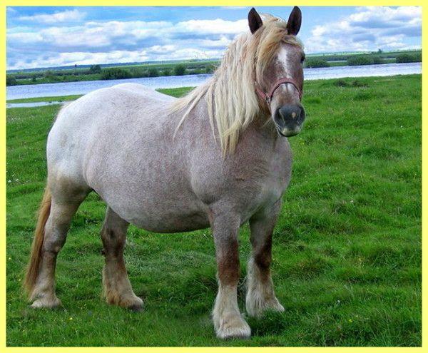 Розведення коней в домашніх умовах відео
