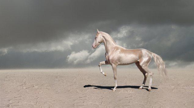 Рідкісні коні божественного забарвлення ізабелловий