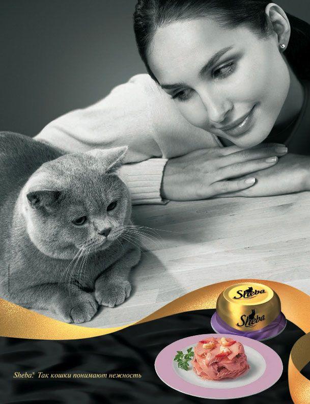 Реклама корму для кішок