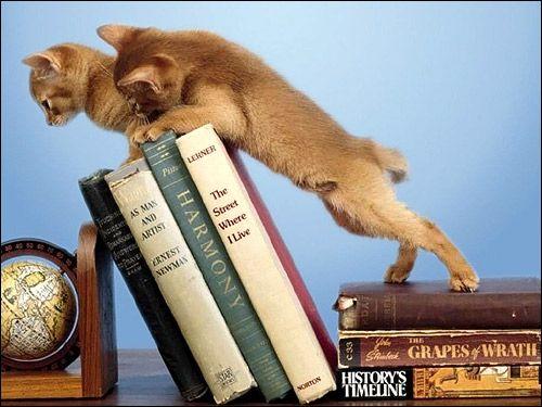 Кошенята-бешкетники, які намагаються принизити книги з книжкової полиці. Фото, фотографія картинка кішки