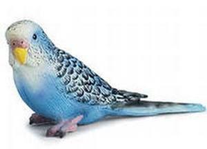 Рід хвилясті папужки (melopsittacus)