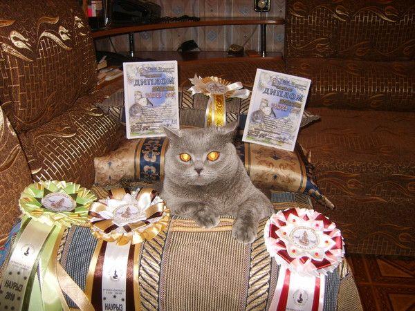 Родовід британської кішки