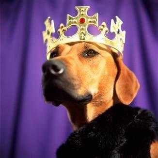 Родовід собаки