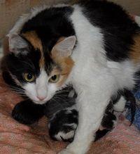 Пологи у кішки: ознаки початку і процес пологів