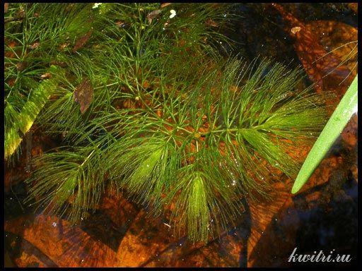 водорості і рослини