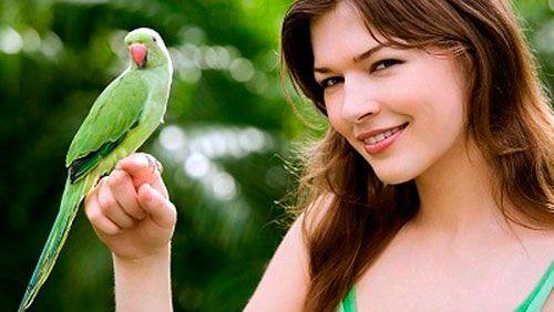 Ручний папужка: як цього домогтися?