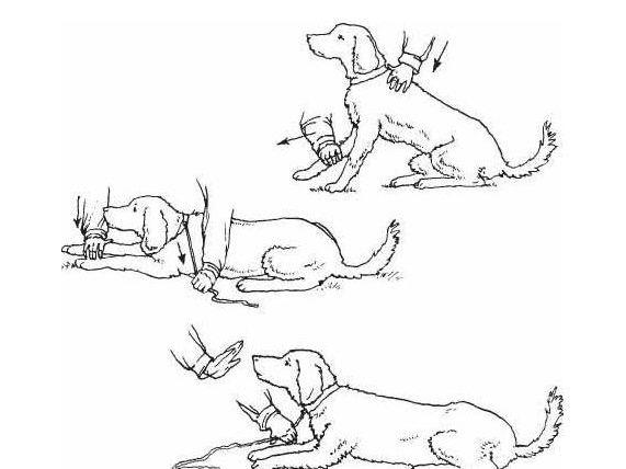 Схема навчання собаки