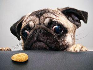 Ласощі для собаки