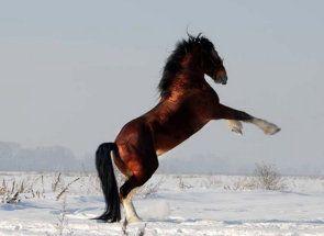 Російські богатирі або коні-ваговози