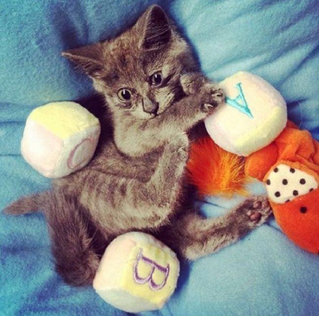 Таким бешкетним кошеням був Кевін.
