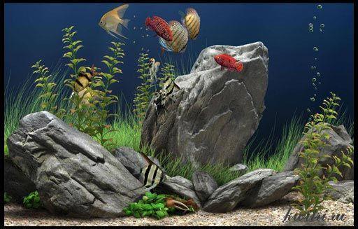 Рибка лежить на дні