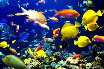 Рибки для початківців акваріумістів