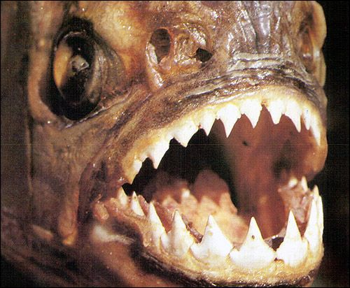 Риби і забобони
