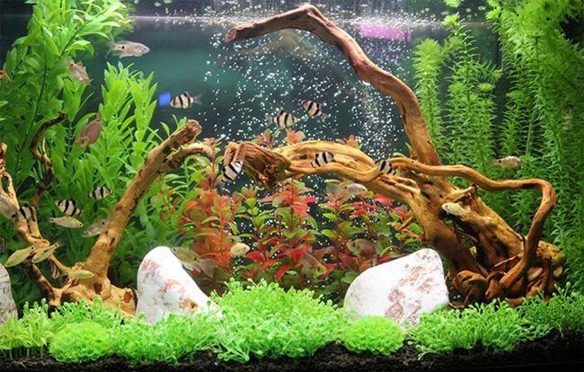 Риби в акваріумі-біотопі