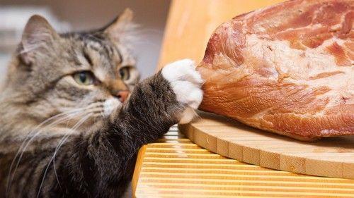 Важливо годувати кішку правильно!