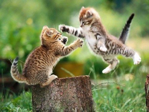 кошенята ревзятся