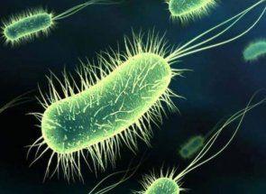 Сальмонельоз - страшний і болісний недугу домашніх курей