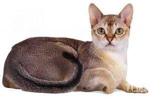Найменша кішка в світі