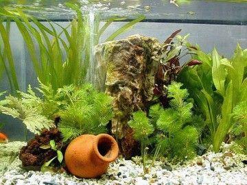 Самостійне декорування акваріума