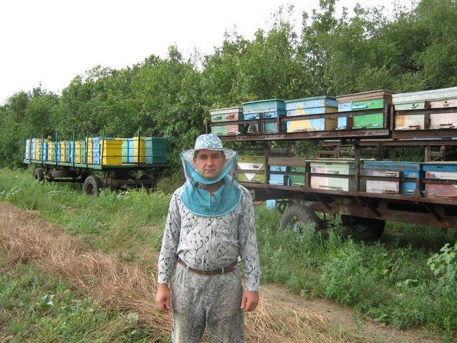 Свердловське бджільництво - гордість уралу